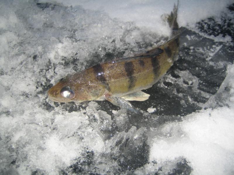 рыбалка на ахтубе в харабалинском районе базы